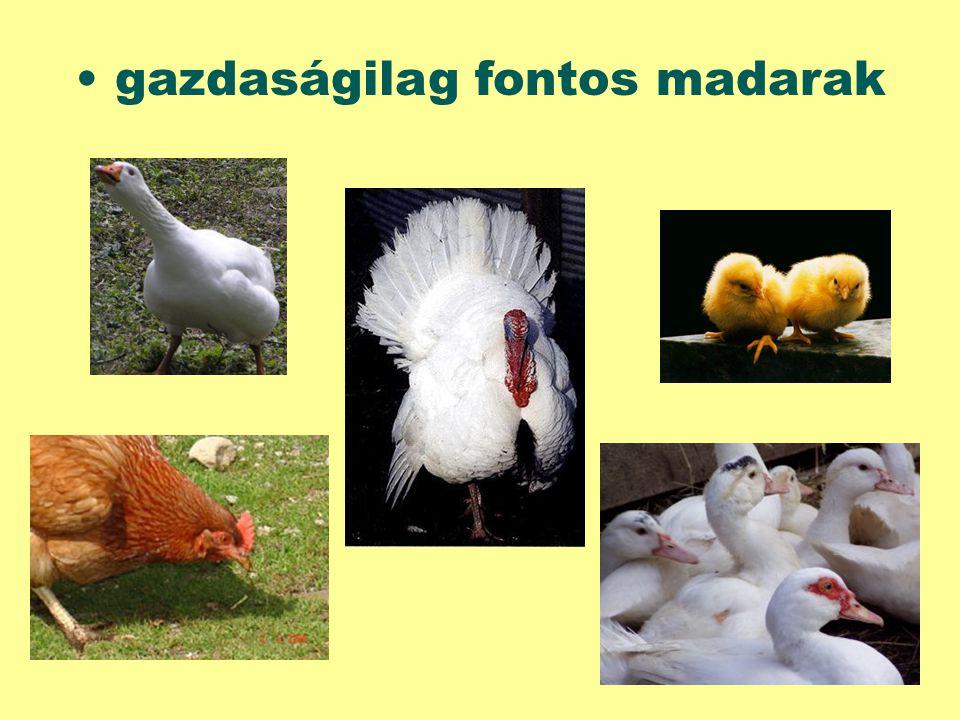 gazdaságilag fontos madarak