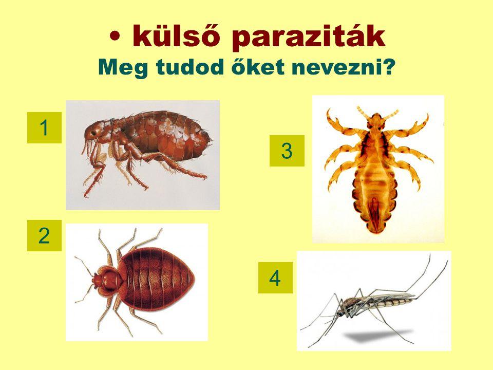 külső paraziták Meg tudod őket nevezni? 1 3 2 4