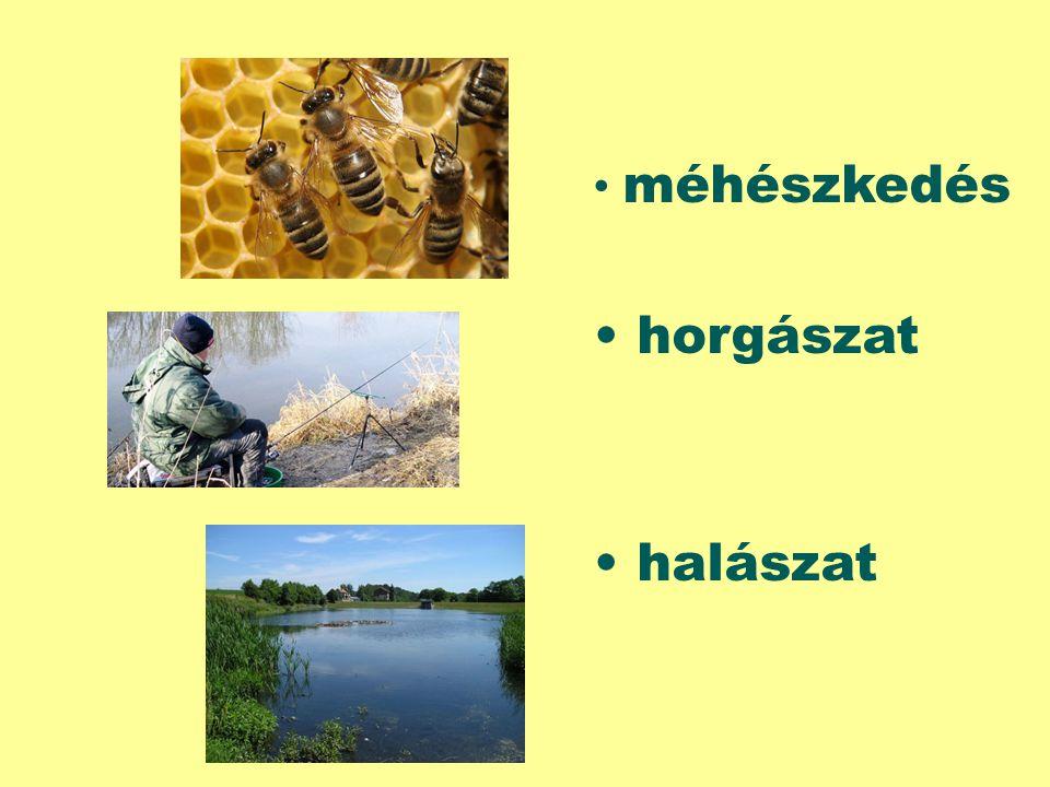 méhészkedés horgászat halászat