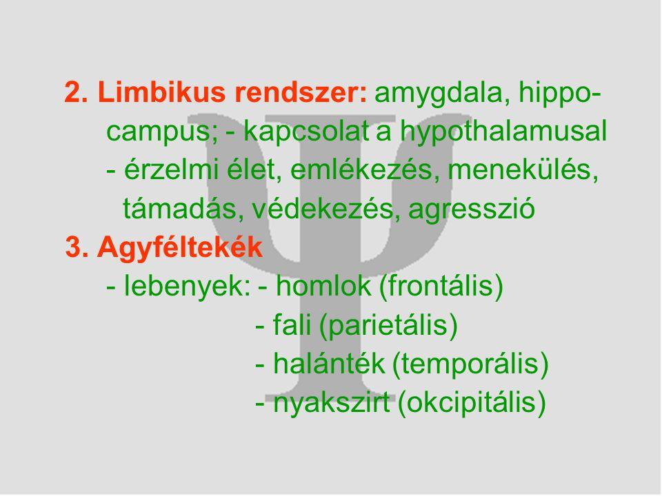 2. Limbikus rendszer: amygdala, hippo- campus; - kapcsolat a hypothalamusal - érzelmi élet, emlékezés, menekülés, támadás, védekezés, agresszió 3. Agy