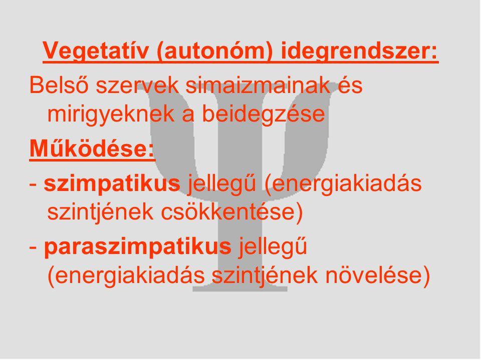 Vegetatív (autonóm) idegrendszer: Belső szervek simaizmainak és mirigyeknek a beidegzése Működése: - szimpatikus jellegű (energiakiadás szintjének csökkentése) - paraszimpatikus jellegű (energiakiadás szintjének növelése)