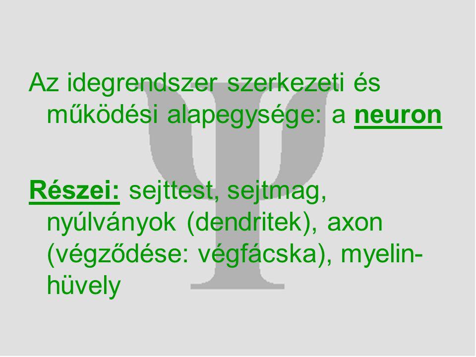 Az idegrendszer szerkezeti és működési alapegysége: a neuron Részei: sejttest, sejtmag, nyúlványok (dendritek), axon (végződése: végfácska), myelin- hüvely