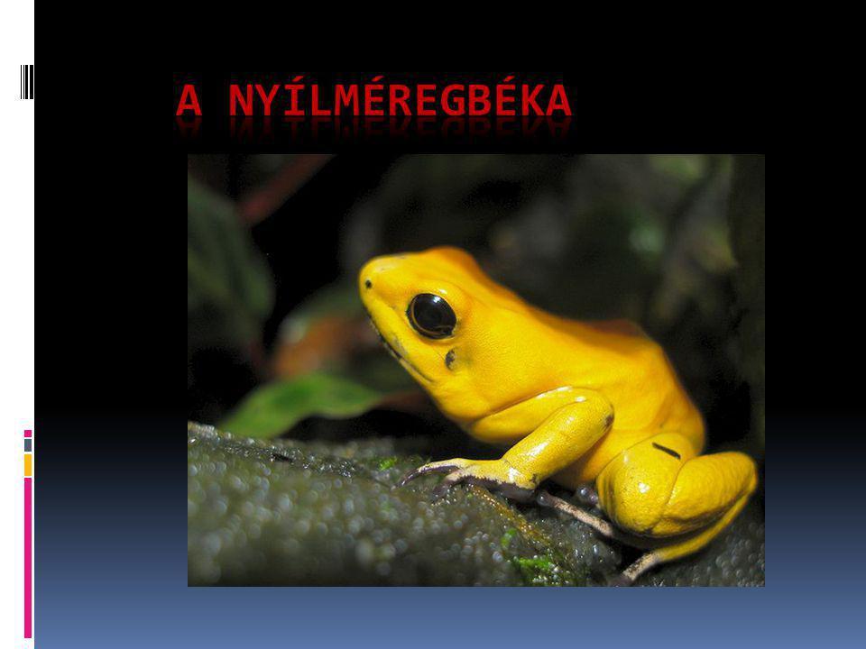 kinézetük  A Közép-Amerikában és Dél-Amerikában őshonos apró, színes nyílméregbékákban eddig több alkaloidát is azonosítottak.