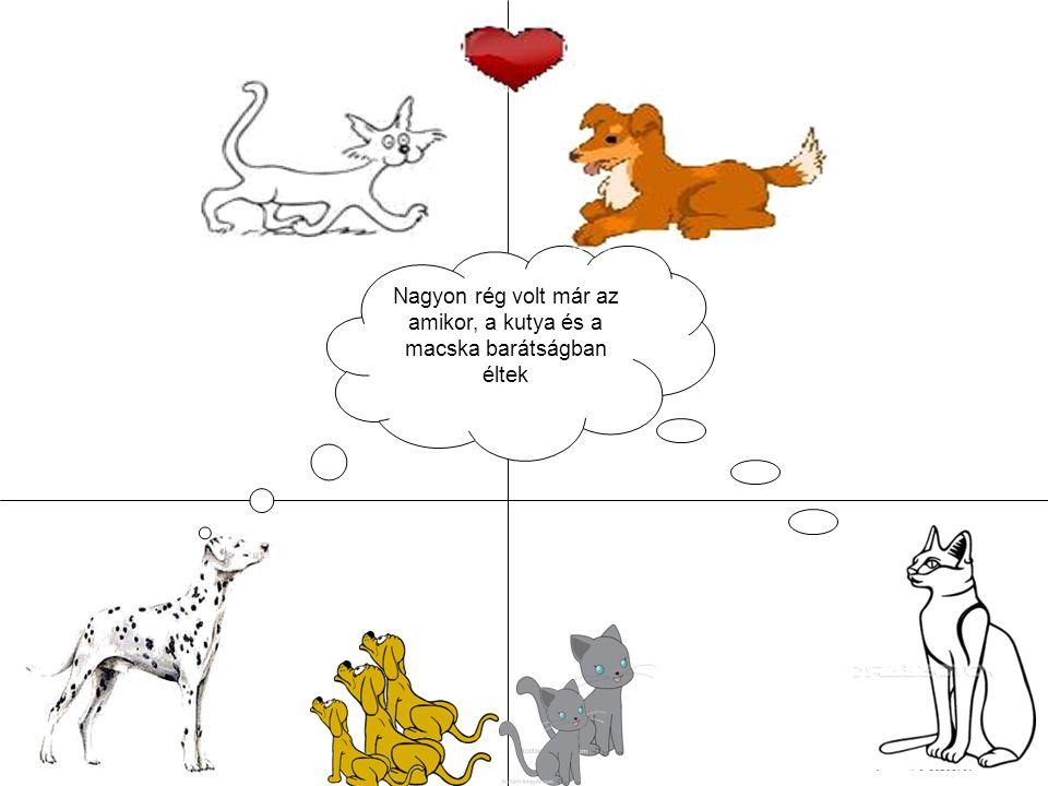 Nagyon rég volt már az amikor, a kutya és a macska barátságban éltek