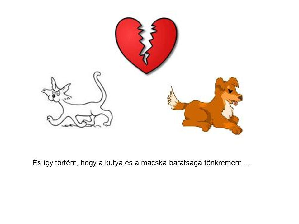 És így történt, hogy a kutya és a macska barátsága tönkrement….