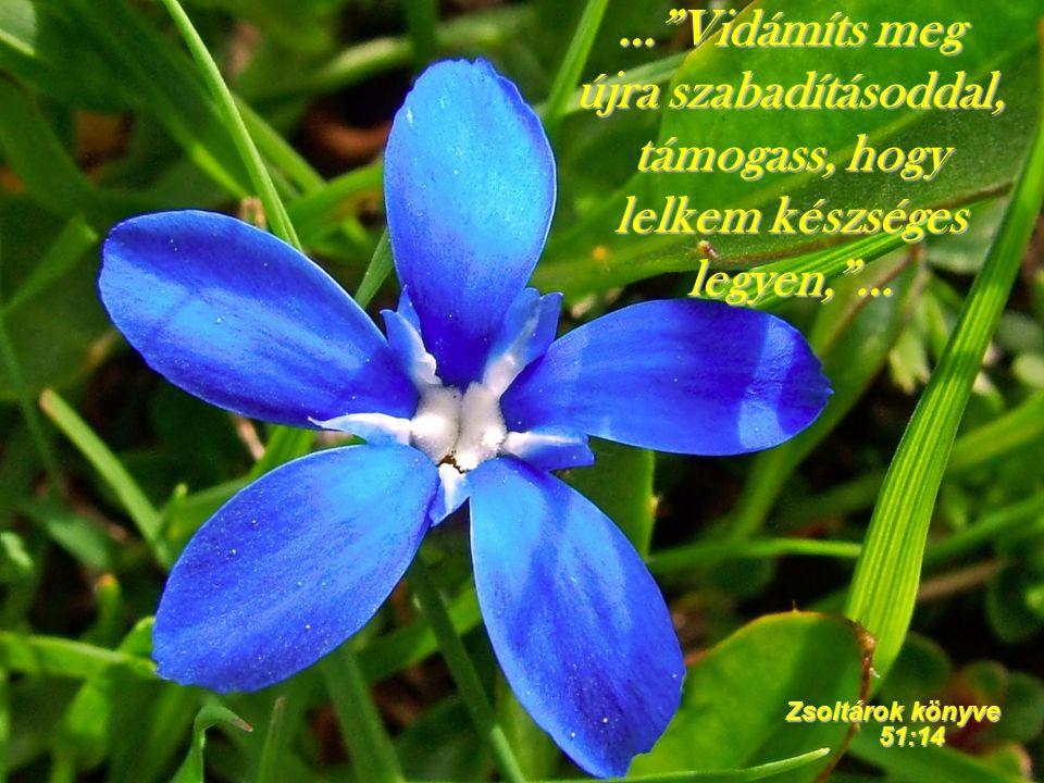 """…""""Vidámíts meg újra szabadításoddal, támogass, hogy lelkem készséges legyen,""""… Zsoltárok könyve 51:14"""
