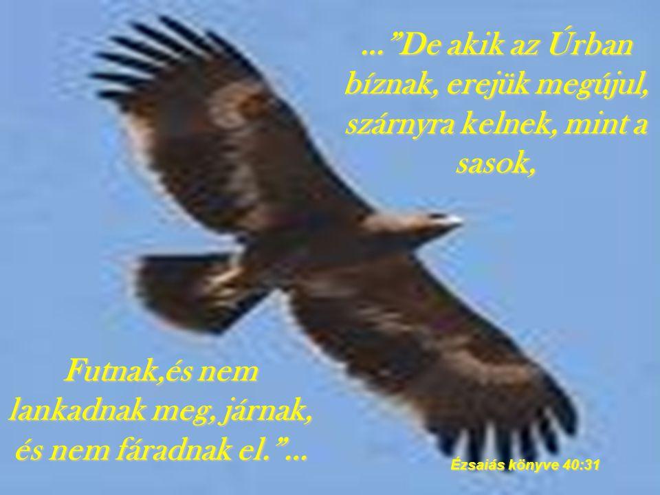 ISTEN ÁLDJON MEG!!! Szeretettel: Bereczki Benjámin.