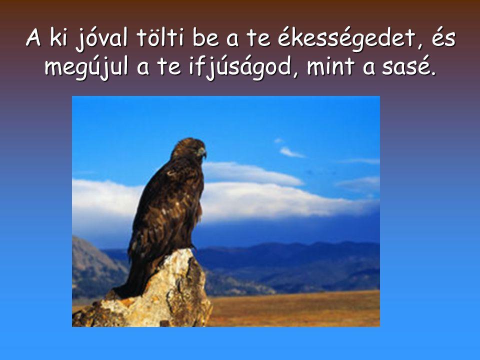 Igazságot cselekszik az Úr, és ítéletet minden elnyomottal.