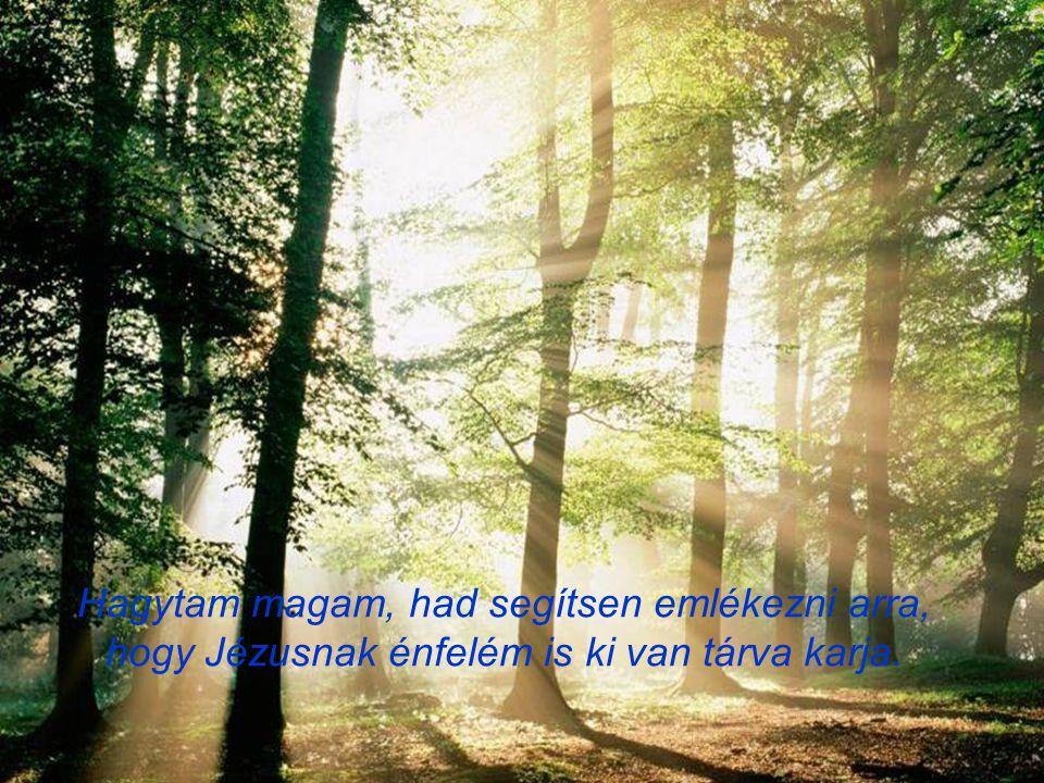 Gyenge fény volt, hívogató, reményt keltő sugár, elmémben egy régi emlék képe elébem áll.