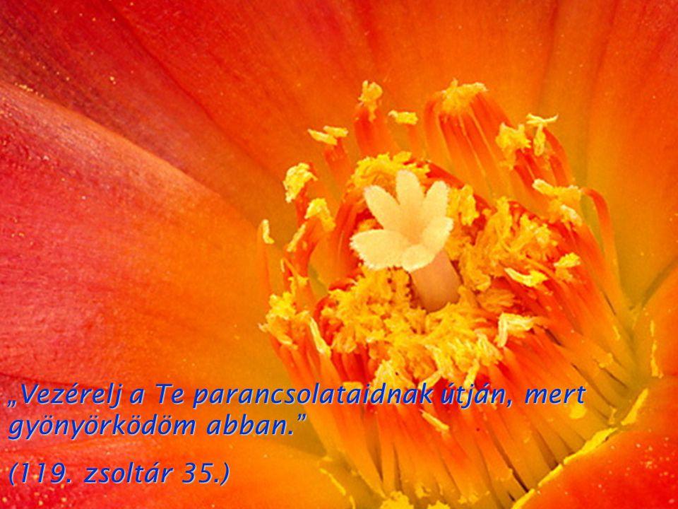 """""""Vezérelj a Te parancsolataidnak útján, mert gyönyörködöm abban."""" (119. zsoltár 35.)"""