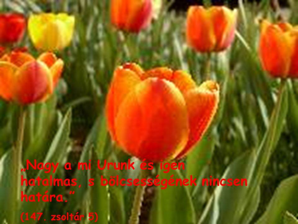 """""""Nagy a mi Urunk és igen hatalmas, s bölcsességének nincsen határa."""" (147. zsoltár 5)"""