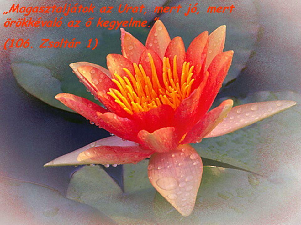 """""""Magasztaljátok az Urat, mert jó, mert örökkévaló az ő kegyelme."""" (106. Zsoltár 1)"""