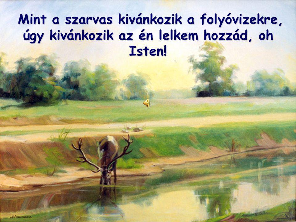 Mint a szarvas kivánkozik a folyóvizekre, úgy kivánkozik az én lelkem hozzád, oh Isten! Mint a szarvas kivánkozik a folyóvizekre, úgy kivánkozik az én