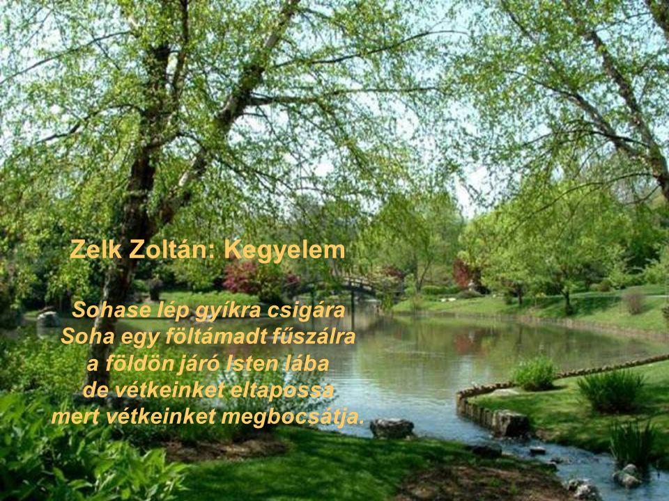 Zelk Zoltán: Kegyelem Sohase lép gyíkra csigára Soha egy föltámadt fűszálra a földön járó Isten lába de vétkeinket eltapossa mert vétkeinket megbocsát