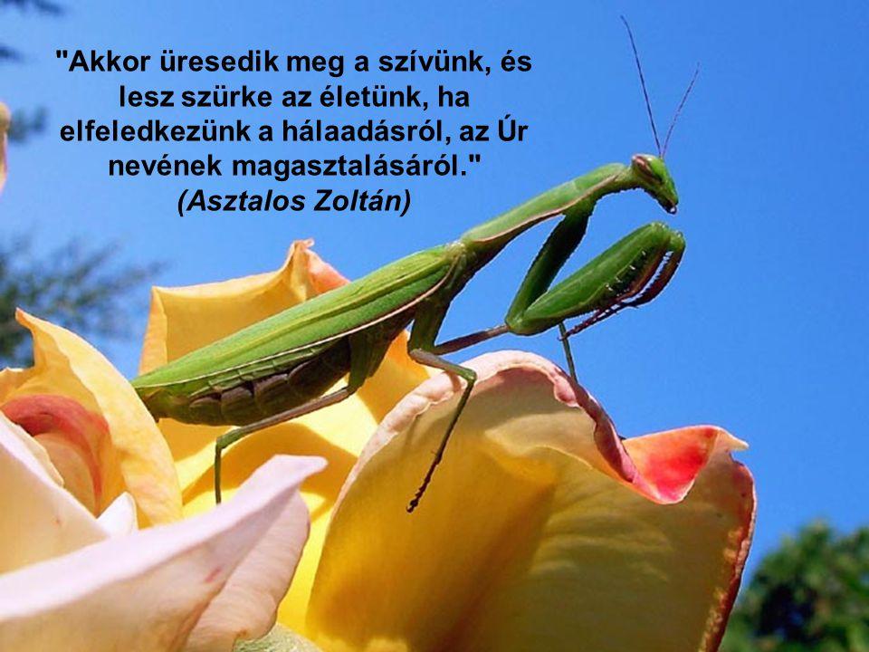 Zelk Zoltán: Kegyelem Sohase lép gyíkra csigára Soha egy föltámadt fűszálra a földön járó Isten lába de vétkeinket eltapossa mert vétkeinket megbocsátja.