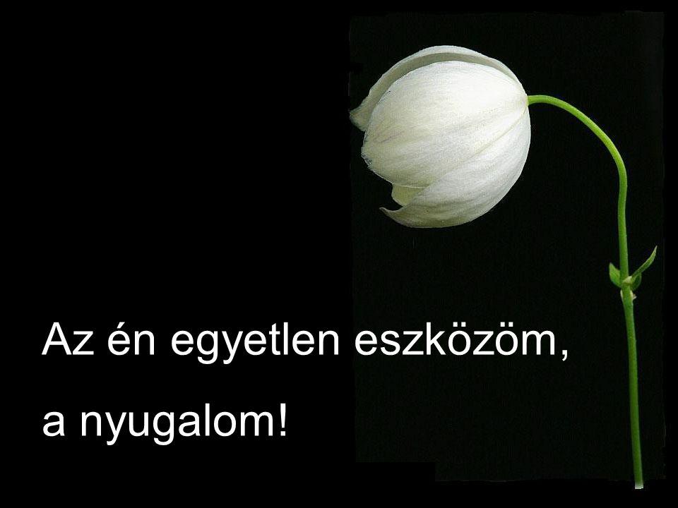Virágok rev ű je…