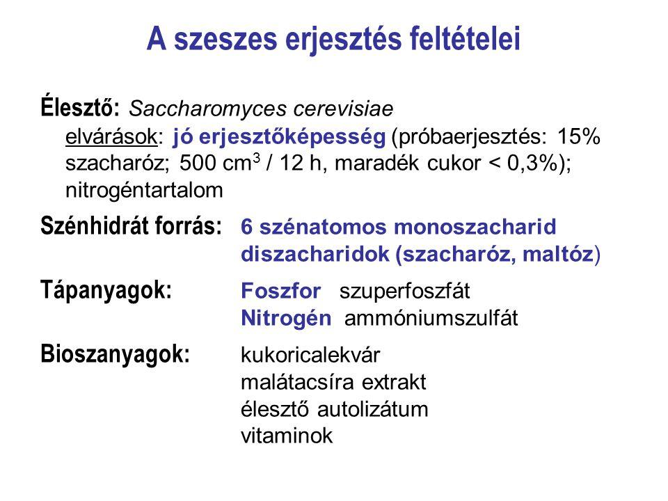 A szeszes erjesztés feltételei Éleszt ő : Saccharomyces cerevisiae elvárások: jó erjesztőképesség (próbaerjesztés: 15% szacharóz; 500 cm 3 / 12 h, mar