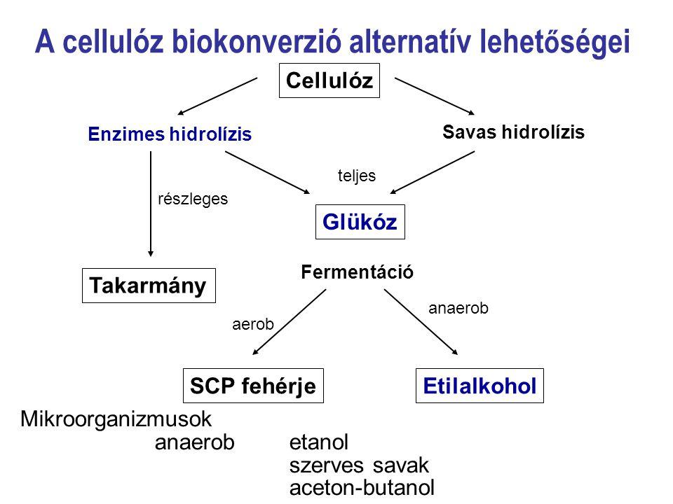 A cellulóz biokonverzió alternatív lehet ő ségei Cellulóz Enzimes hidrolízis Savas hidrolízis Glükóz Takarmány Fermentáció SCP fehérjeEtilalkohol telj