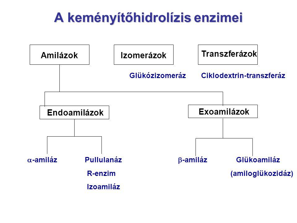 A keményítőhidrolízis enzimei Izomerázok Endoamilázok Amilázok Transzferázok Exoamilázok Glükózizomeráz Ciklodextrin-transzferáz  -amilázPullulanáz