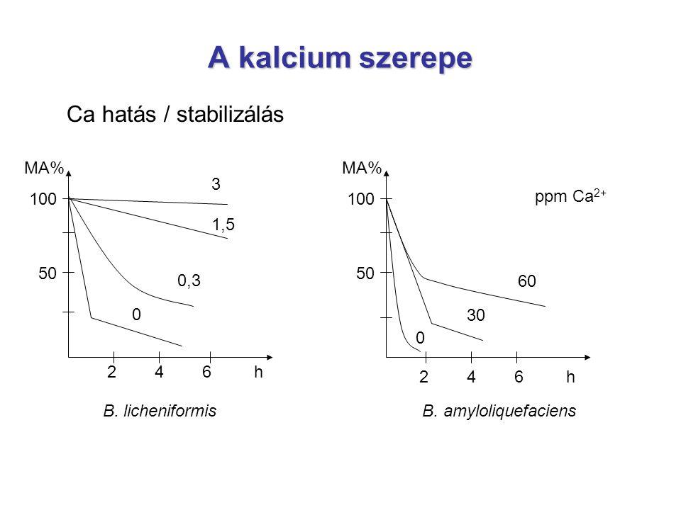 A kalcium szerepe Ca hatás / stabilizálás B. licheniformis B. amyloliquefaciens 2 4 6 h MA% 100 50 MA% 100 50 3 1,5 0 0,3 30 60 0 ppm Ca 2+