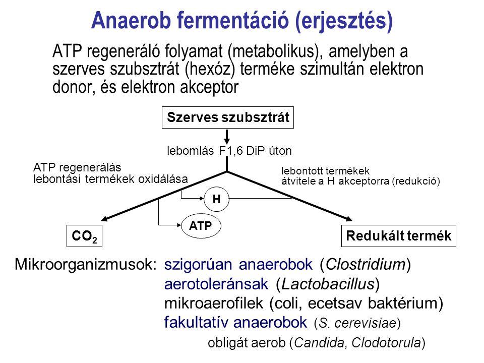Anaerob fermentáció (erjesztés) ATP regeneráló folyamat (metabolikus), amelyben a szerves szubsztrát (hexóz) terméke szimultán elektron donor, és elek