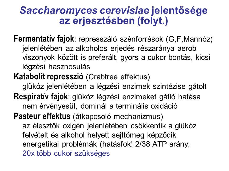 Saccharomyces cerevisiae jelentősége az erjesztésben (folyt.) Fermentatív fajok : represszáló szénforrások (G,F,Mannóz) jelenlétében az alkoholos erje