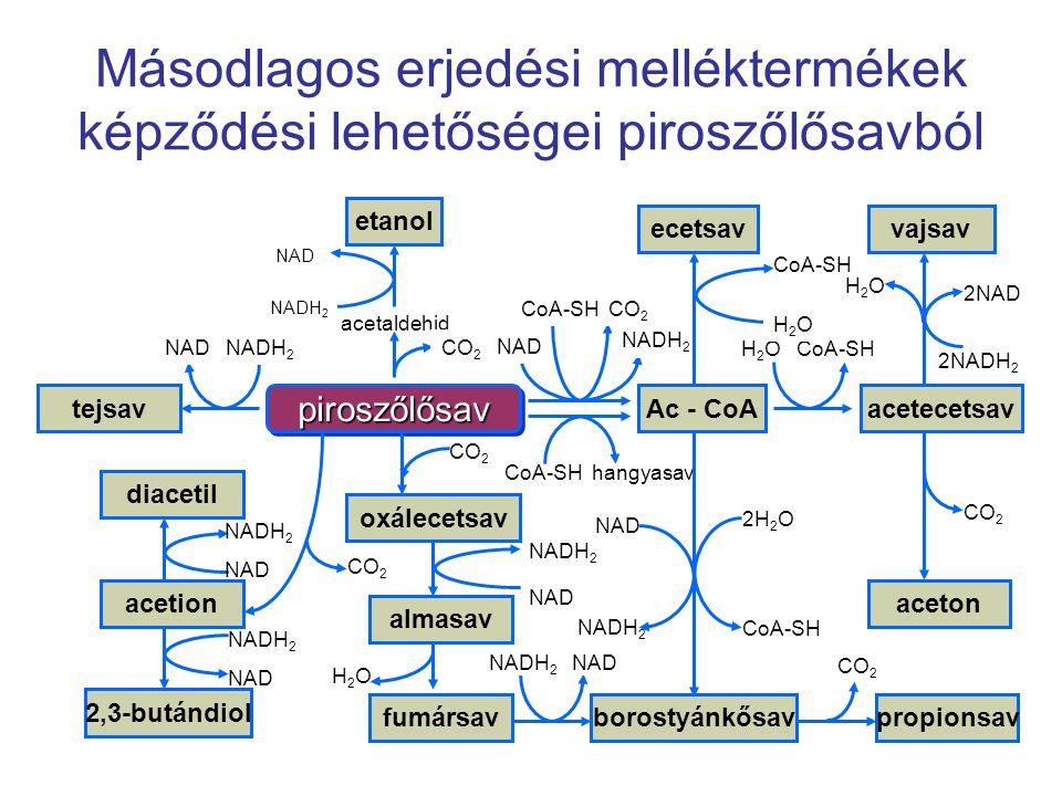 Másodlagos erjedési melléktermékek képződési lehetőségei piroszőlősavból piroszőlősavpiroszőlősav tejsavAc - CoA vajsavecetsav etanol borostyánkősavfu