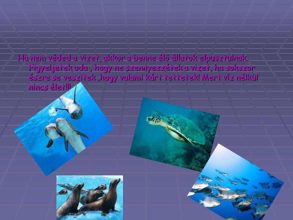 Ha nem véded a vizet, akkor a benne élő állatok elpusztulnak. Figyeljetek oda, hogy ne szennyezzétek a vizet, ha sokszor észre se veszitek,hogy valami