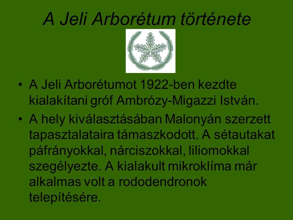 A Jeli Arborétum története A Jeli Arborétumot 1922-ben kezdte kialakítani gróf Ambrózy-Migazzi István. A hely kiválasztásában Malonyán szerzett tapasz