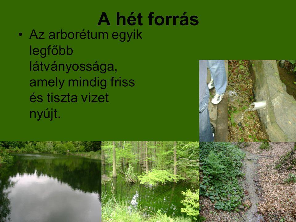 A hét forrás Az arborétum egyik legfőbb látványossága, amely mindig friss és tiszta vizet nyújt.