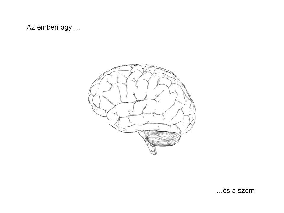 Az emberi agy......és a szem