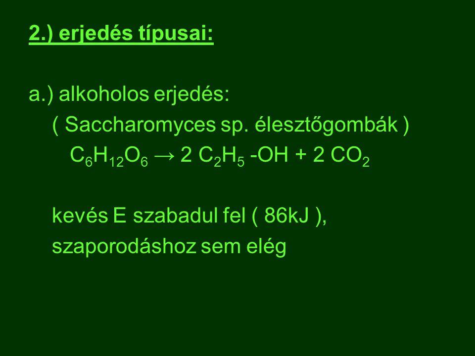 2.) erjedés típusai: a.) alkoholos erjedés: ( Saccharomyces sp. élesztőgombák ) C 6 H 12 O 6 → 2 C 2 H 5 -OH + 2 CO 2 kevés E szabadul fel ( 86kJ ), s