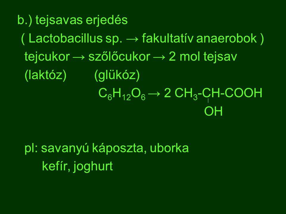b.) tejsavas erjedés ( Lactobacillus sp. → fakultatív anaerobok ) tejcukor → szőlőcukor → 2 mol tejsav (laktóz) (glükóz) C 6 H 12 O 6 → 2 CH 3 -CH-COO