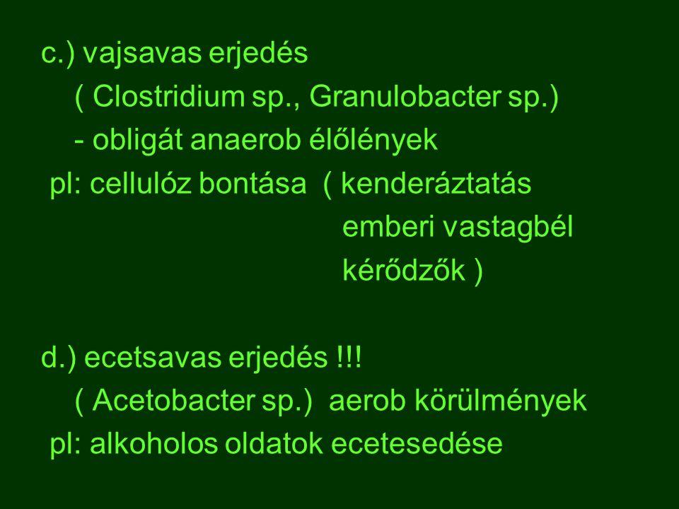 c.) vajsavas erjedés ( Clostridium sp., Granulobacter sp.) - obligát anaerob élőlények pl: cellulóz bontása ( kenderáztatás emberi vastagbél kérődzők