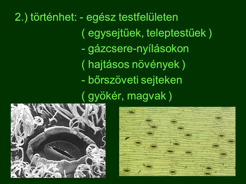 2.) történhet: - egész testfelületen ( egysejtűek, teleptestűek ) - gázcsere-nyílásokon ( hajtásos növények ) - bőrszöveti sejteken ( gyökér, magvak )