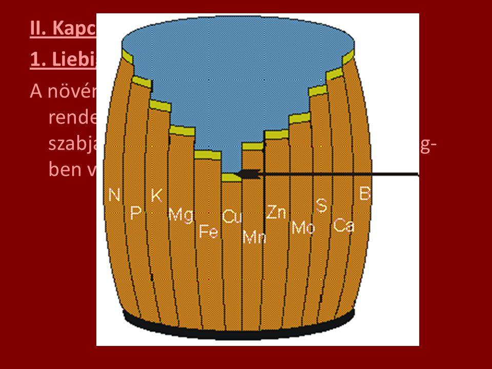 II. Kapcsolódó törvények: 1. Liebig-féle minimum törvény ( 1840 ): A növények fejlődésének ütemét a rendelkezésre álló elemek közül mindig az szabja m