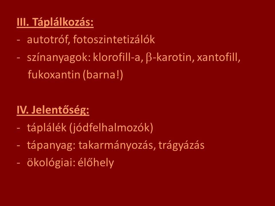 III. Táplálkozás: -autotróf, fotoszintetizálók -színanyagok: klorofill-a,  -karotin, xantofill, fukoxantin (barna!) IV. Jelentőség: -táplálék (jódfel