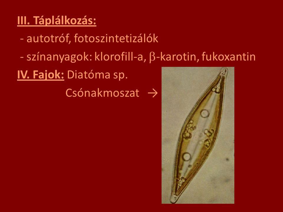 III. Táplálkozás: - autotróf, fotoszintetizálók - színanyagok: klorofill-a,  -karotin, fukoxantin IV. Fajok: Diatóma sp. Csónakmoszat →