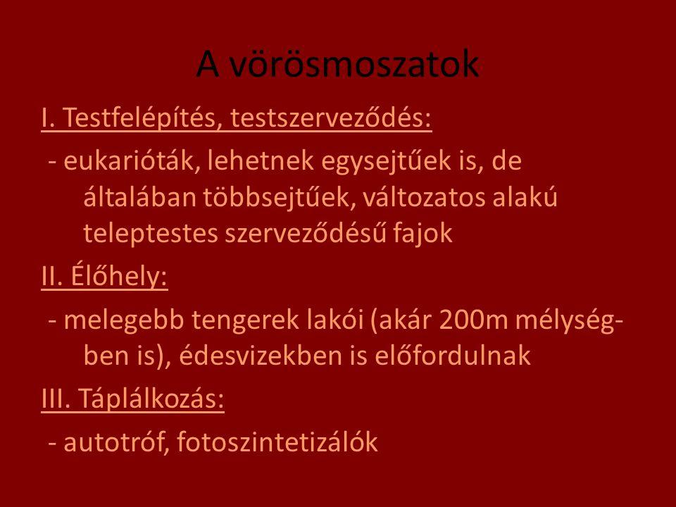 A vörösmoszatok I. Testfelépítés, testszerveződés: - eukarióták, lehetnek egysejtűek is, de általában többsejtűek, változatos alakú teleptestes szerve