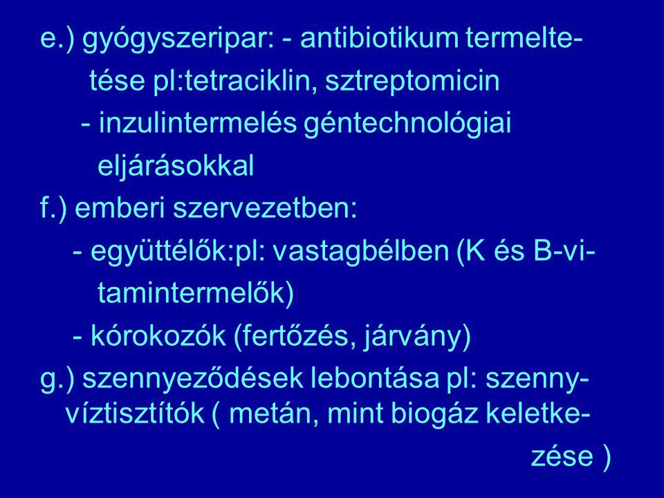 e.) gyógyszeripar: - antibiotikum termelte- tése pl:tetraciklin, sztreptomicin - inzulintermelés géntechnológiai eljárásokkal f.) emberi szervezetben: - együttélők:pl: vastagbélben (K és B-vi- tamintermelők) - kórokozók (fertőzés, járvány) g.) szennyeződések lebontása pl: szenny- víztisztítók ( metán, mint biogáz keletke- zése )