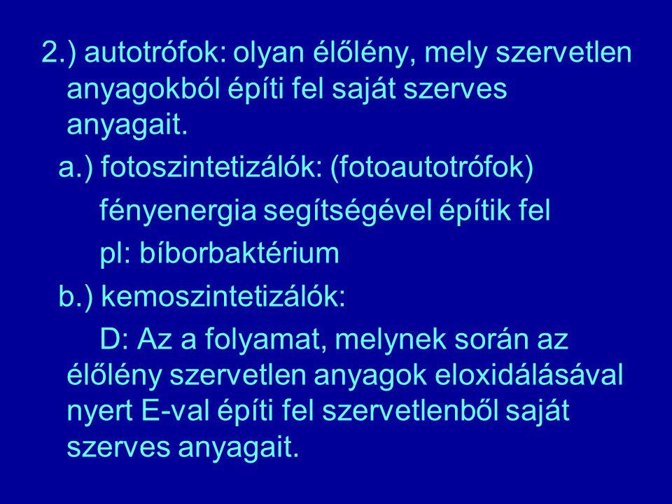 2.) autotrófok: olyan élőlény, mely szervetlen anyagokból építi fel saját szerves anyagait. a.) fotoszintetizálók: (fotoautotrófok) fényenergia segíts