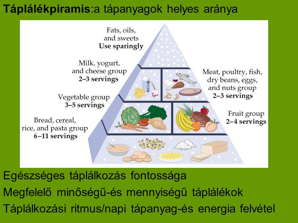 Táplálékpiramis:a tápanyagok helyes aránya Egészséges táplálkozás fontossága Megfelelő minőségű-és mennyiségű táplálékok Táplálkozási ritmus/napi tápanyag-és energia felvétel