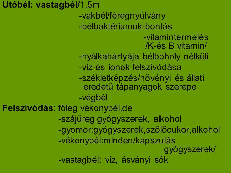 Utóbél: vastagbél/1,5m -vakbél/féregnyúlvány -bélbaktériumok-bontás -vitamintermelés /K-és B vitamin/ -nyálkahártyája bélboholy nélküli -víz-és ionok felszívódása -székletképzés/növényi és állati eredetű tápanyagok szerepe -végbél Felszívódás: főleg vékonybél,de -szájüreg:gyógyszerek, alkohol -gyomor:gyógyszerek,szőlőcukor,alkohol -vékonybél:minden/kapszulás gyógyszerek/ -vastagbél: víz, ásványi sók