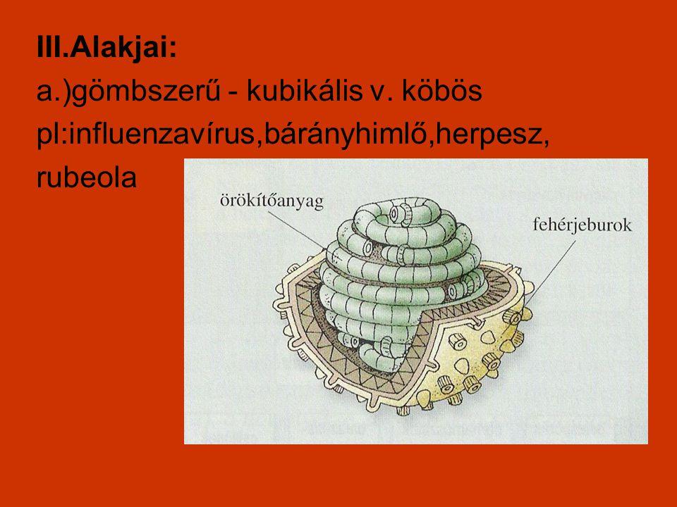 III.Alakjai: a.)gömbszerű - kubikális v. köbös pl:influenzavírus,bárányhimlő,herpesz, rubeola