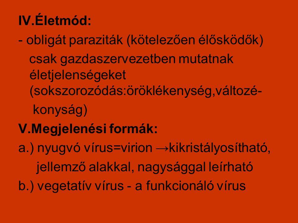IV.Életmód: - obligát paraziták (kötelezően élősködők) csak gazdaszervezetben mutatnak életjelenségeket (sokszorozódás:öröklékenység,változé- konyság)