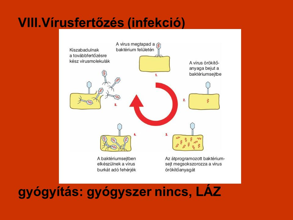 VIII.Vírusfertőzés (infekció) gyógyítás: gyógyszer nincs, LÁZ