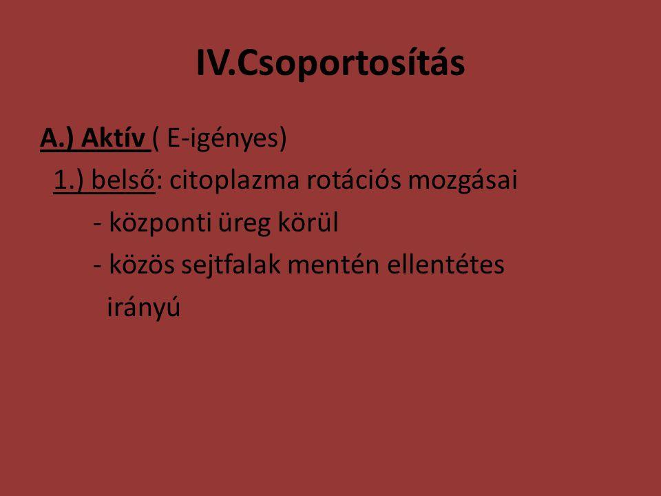 IV.Csoportosítás A.) Aktív ( E-igényes) 1.) belső: citoplazma rotációs mozgásai - központi üreg körül - közös sejtfalak mentén ellentétes irányú