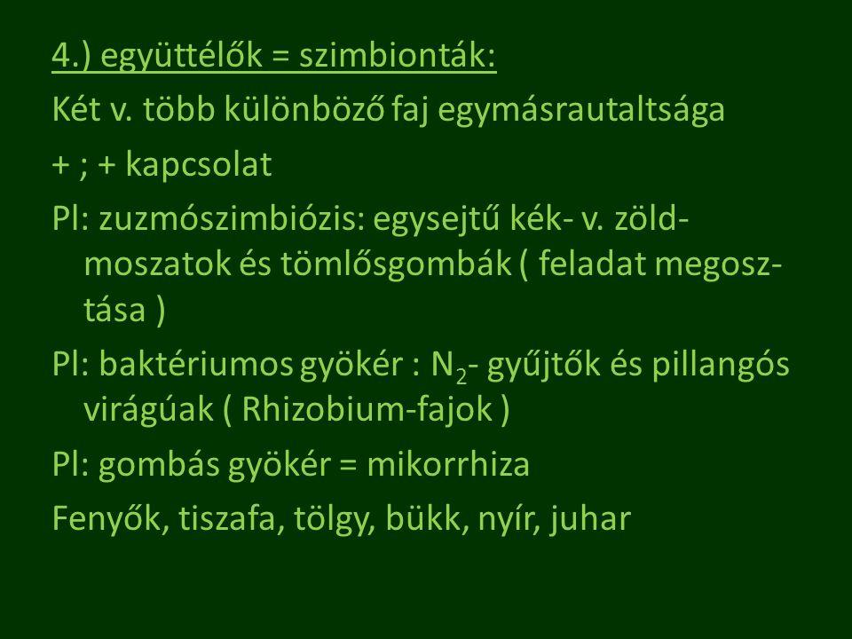 4.) együttélők = szimbionták: Két v. több különböző faj egymásrautaltsága + ; + kapcsolat Pl: zuzmószimbiózis: egysejtű kék- v. zöld- moszatok és töml