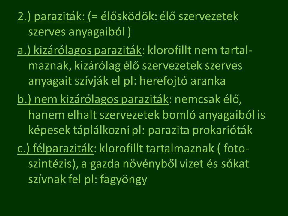 2.) paraziták: (= élősködök: élő szervezetek szerves anyagaiból ) a.) kizárólagos paraziták: klorofillt nem tartal- maznak, kizárólag élő szervezetek