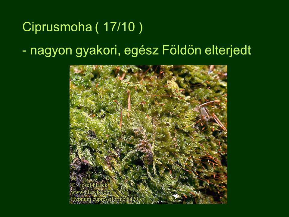 Ciprusmoha ( 17/10 ) - nagyon gyakori, egész Földön elterjedt